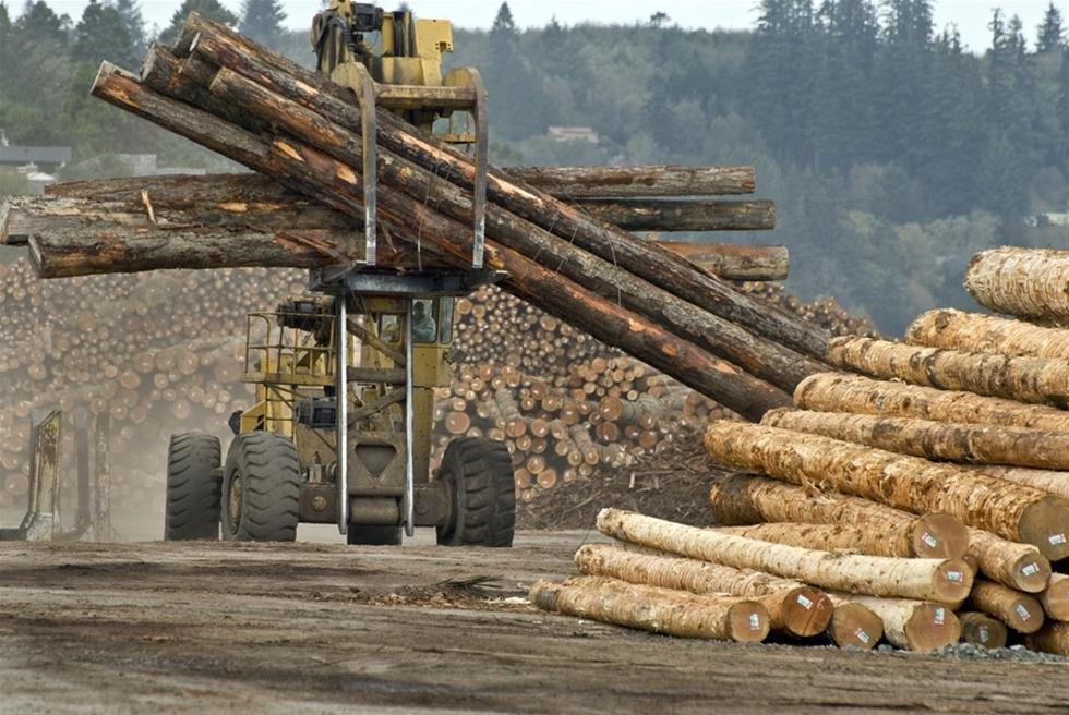 Skogen är en av de farligaste arbetsplatserna. – Skogsbruk sticker ut. Per tusen anställda ligger den gruppen i topp, säger Patrik Hemmingsson, arbetsmiljöinspektör.