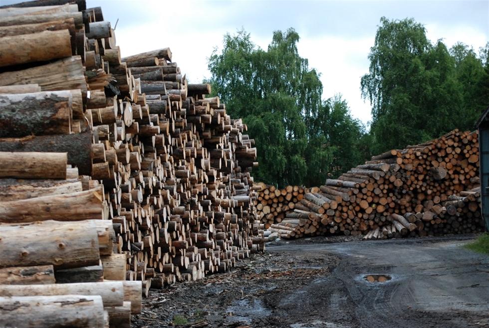 Var får man mest skog för pengarna? Den frågan är inte lätt att ge ett rakt svar på. Det är svårare än vad tidningsrubriker kan förled läsarna att tro. – Under lång tid har Västernorrland varit en sådan region. Då har hänsyn tagits till närhet till industri, kvalitet på skog och markens bördighet, säger Johan Freij, skogsanalytiker på Danske Bank.
