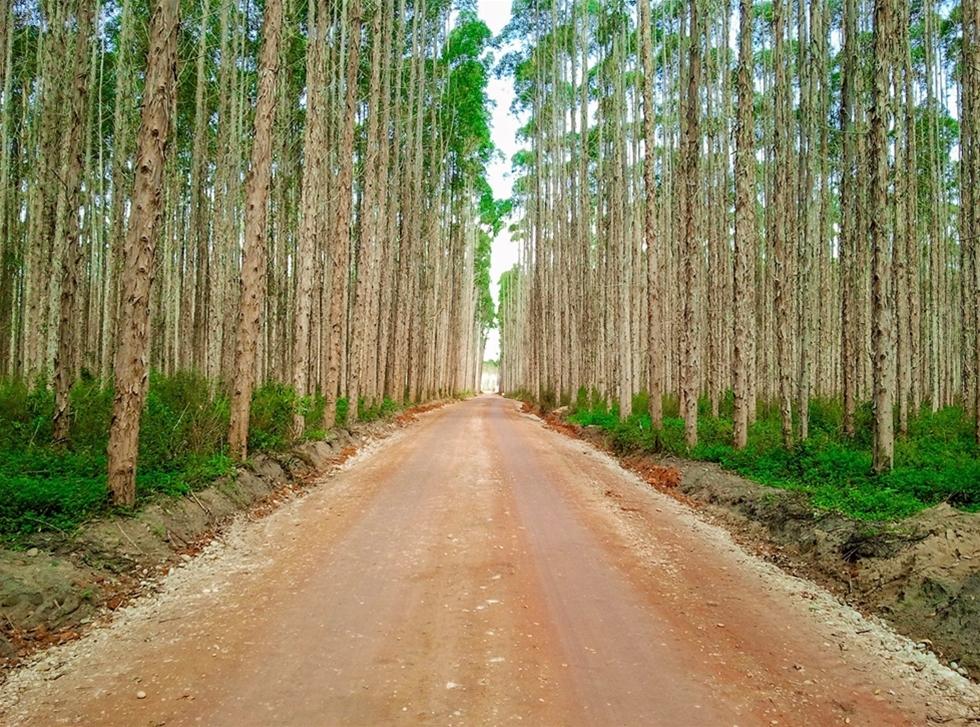 Skogen är en av de viktigaste näringarna i Brasilien, med mycket hög tillväxt. Men ett förändrat klimat med torka kan leda till minskad tillväxt av bland annat odlad eukalyptus och tall. – Brasilien behöver de senaste kunskaperna och teknologierna. Det presenteras på Elmia Wood, säger Jorge R. Malinovski, VD för Malinovski i Brasilien.