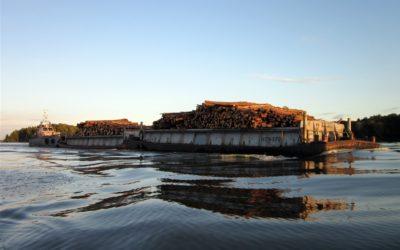 Skogsvård och sjöväder för Kuddby